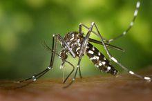 Aedes Mosquito China Zika Regulation